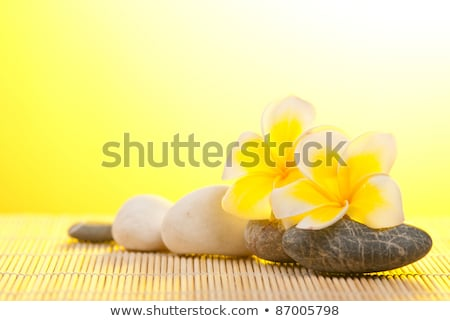 Stock foto: Leelawadee Flower And Pebbles On Bamboo Background