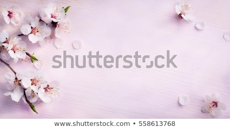 verde · vector · floral · marco · hojas · aves - foto stock © lizard