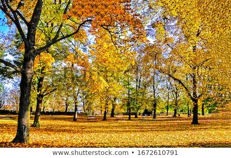 Stock photo: beautiful autumn trees in the park