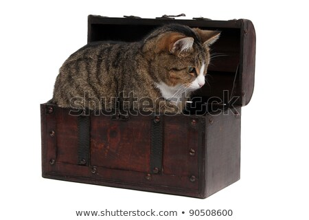 Treasure Chest With Inquisitively Cat Stock fotó © pterwort