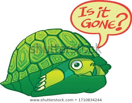 Shy Turtle Foto stock © zooco