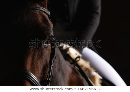 silhouet · paard · strand · zonsondergang · sport · natuur - stockfoto © aliftin
