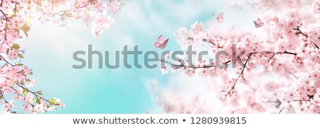 Stock photo: Japanese cherry tree branches against blue sky