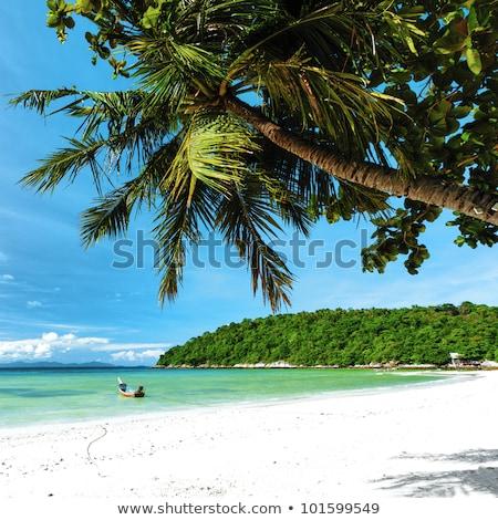 пальмами квадратный hdr небе Palm зеленый Сток-фото © moses