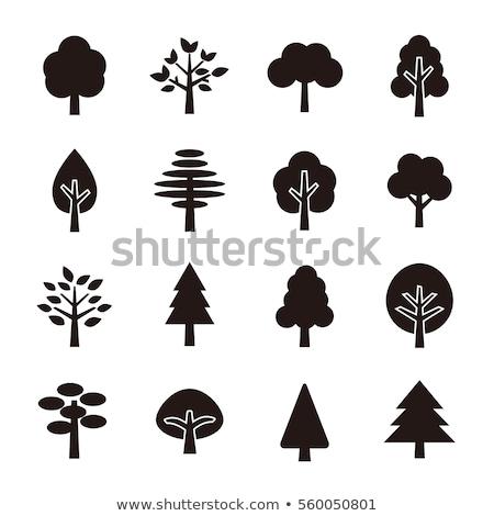Albero simboli set isolato bianco design Foto d'archivio © WaD