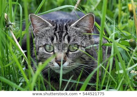 家 · 猫 · 芝生 · 午後 · 太陽 · 草 - ストックフォト © 3523studio