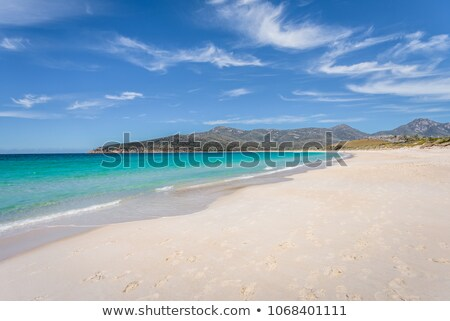 Belle ciel bleu océan eau palmiers croissant Photo stock © chrascina