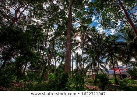 fényes · nap · ragyogó · lefelé · kókusz · pálmafák - stock fotó © chrascina