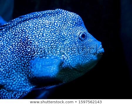 trópusi · óceán · víz · körül · nagy · kövek - stock fotó © chrascina