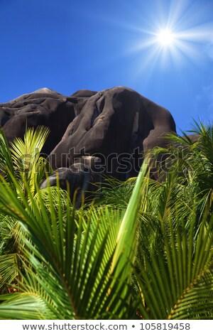 Palmiye parlak güneş ağaç mavi barış Stok fotoğraf © chrascina