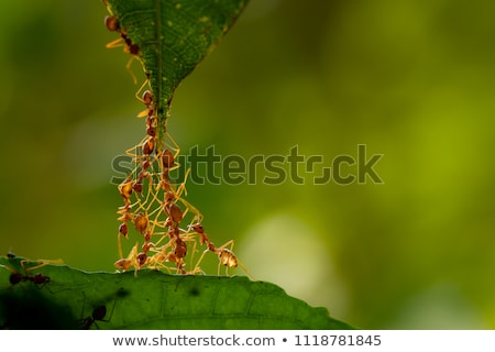 ant stock photo © stocksnapper