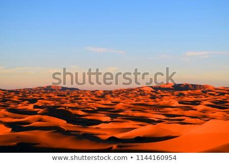 Kamelen trekking sahara zonsondergang natuur zomer Stockfoto © danielgilbey