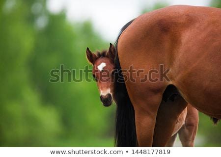 Csikó nyár csoport lovak mező égbolt Stock fotó © vadimmmus