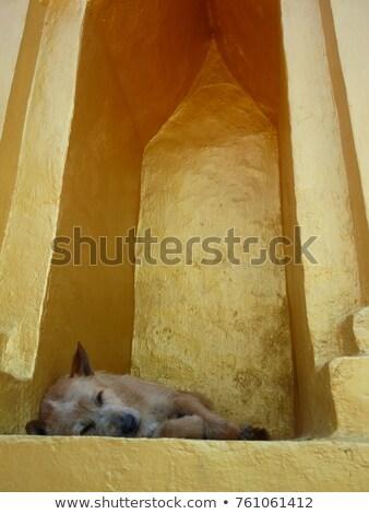 Lui hond antieke huis hout venster Stockfoto © eldadcarin