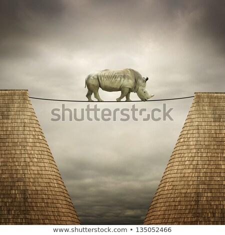 gergedan · dengeli · hat · doğa · arka · plan · halat - stok fotoğraf © mike_expert