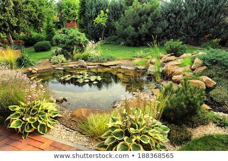 garden pond stock photo © alexeys