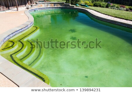 Filthy backyard swimming pool and patio Stock photo © backyardproductions