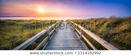 wooden path to the sea stock photo © dinozzaver