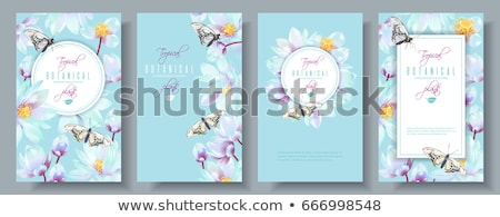 Vector Background with flowers and butterfly stock photo © WaD