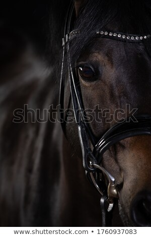 horse close up stock photo © taden