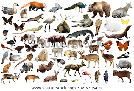 asian animals collection isolated on white background stock photo © anan