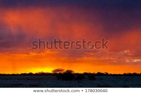 festői · fa · bokrok · sziluett · naplemente · sivatag - stock fotó © michaklootwijk