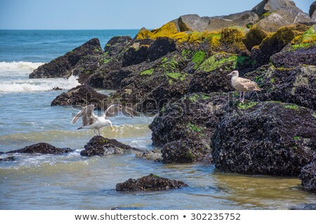 Seagull Rock Stock photo © rghenry
