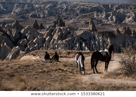 two beautiful horses resting on the desert stock photo © konradbak