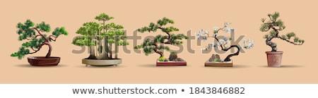 bonsai · görüntü · güzel · küçük · ağaç · bahçe - stok fotoğraf © jonnysek