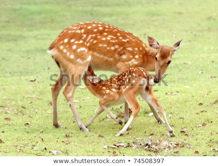 Stockfoto: Mother Nursing Baby On Meadow