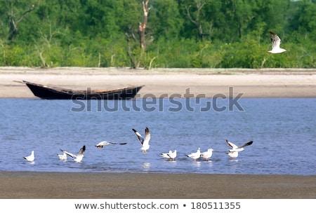 Napfelkelte Banglades repülés madarak tengerpart víz Stock fotó © bdspn