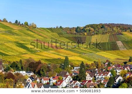 wine fields in stuttgart germany stock photo © juhku