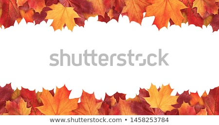 autumn fall leaves border stock photo © irisangel