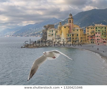 seagull flying over camogli italy stock photo © luisapuccini