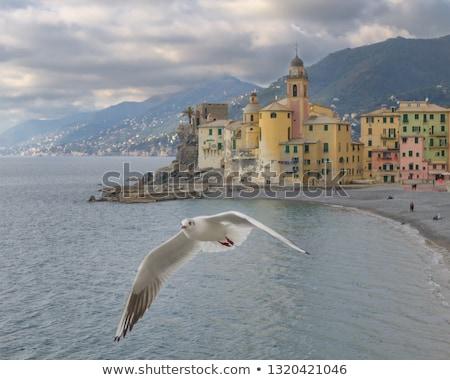 Sirály repülés Olaszország falu tájkép madár Stock fotó © Luisapuccini