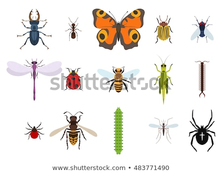 Vector illustration of a wasp. Top view. stock photo © ulyankin