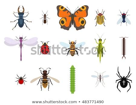 Vespa topo ver amarelo inseto perigo Foto stock © ulyankin