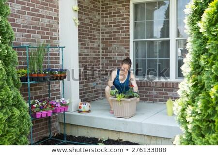 büyük · kenevir · bitkiler · çiçek · çim · yaprakları - stok fotoğraf © ozgur