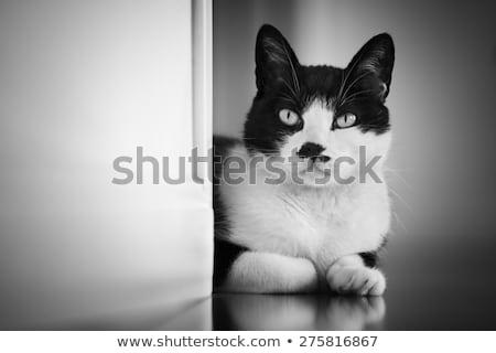 Curious Black and White Cat Stock photo © tainasohlman