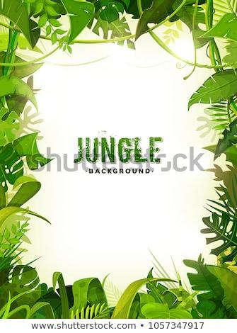 Vector Jungle Frame Stock photo © benchart