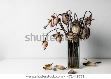 withered flower dried petals Stock photo © sirylok
