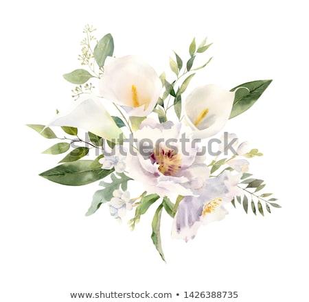 Calla lily flower Stock photo © artfotoss