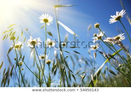 Cielo azul grupo cielo verano azul color Foto stock © mahout
