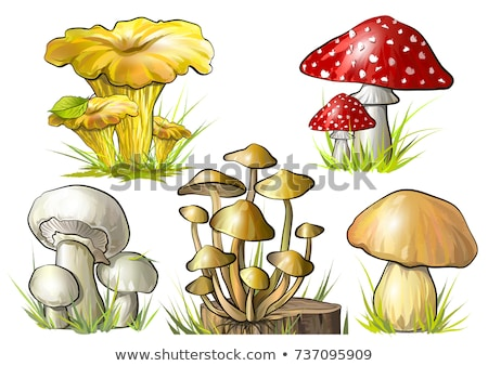 a stump with mushrooms stock photo © bluering