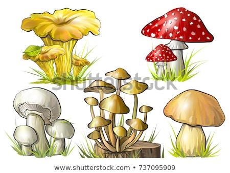 Grzyby ilustracja lasu zielone roślin graficzne Zdjęcia stock © bluering