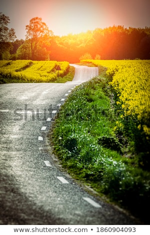 Yellow rapeseed field and a emty road Stock photo © mikdam