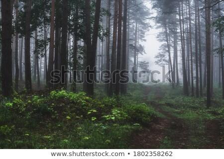 Onverharde weg mist ochtend landschap boom bos Stockfoto © Juhku
