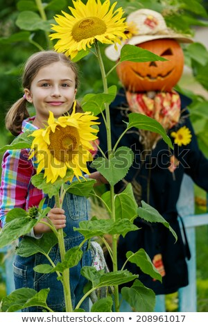 scarecrow standing in sunflower field stock photo © bluering