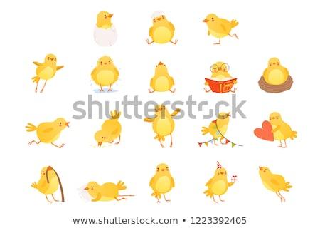 Amarelo pássaro alimentação pequeno natureza fundo Foto stock © bluering