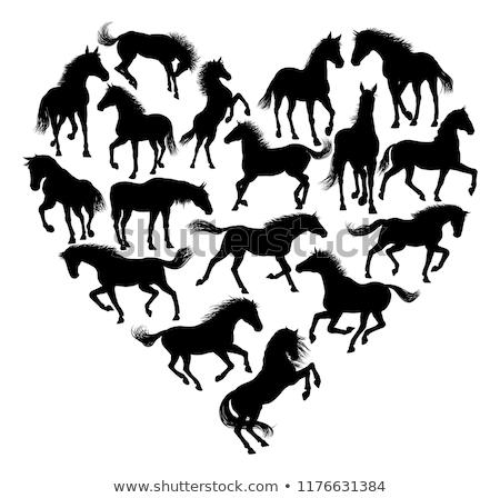 Aşıklar at siyah aygır plaj Stok fotoğraf © cynoclub